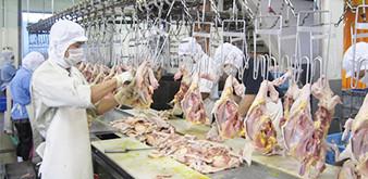 Thông báo tuyển Thực tập sinh ngành CNTP: Chế biến thịt gà làm việc tại Nhật Bản tháng 11/2018