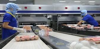 Tuyển 12 nam thực tập sinh ngành chăn nuôi đi làm việc tại tỉnh Shizuoka Nhật Bản. Lương 28 triệu đồng/tháng