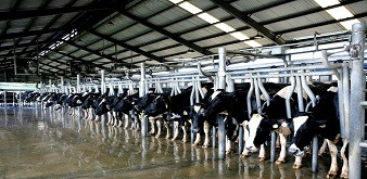 Thông báo tuyển 6 nữ kỹ sư chăn nuôi bò thịt đi làm việc tại tỉnh Aomori Nhật Bản. Lương 42 triệu đồng/tháng