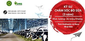 Thông báo tuyển Kỹ sư chăm sóc bò sữa làm việc tại Nhật Bản tháng 5