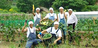 Trao đổi sinh viên Nông nghiệp 6 tháng tại Nhật Bản, cơ hội thực tập nghề nghiệp quý giá dành cho sinh viên khoa Nông học