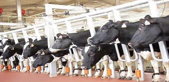 Thông báo tuyển 4 nữ kỹ sư chăn nuôi thú y đi làm việc tại tỉnh Iwate Nhật Bản. Lương 42 triệu/tháng