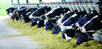 Thông báo tuyển 2 nữ kỹ sư chăn nuôi bò sữa làm việc tại tỉnh Hokkaido Nhật Bản. Lương 44 triệu đồng/tháng