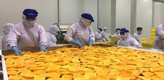 Tuyển 10 nữ chế biến thực phẩm làm việc tại tỉnh Nagano Nhật Bản. Lương 29 triệu đồng/tháng.