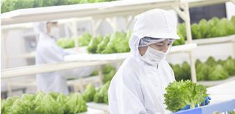 Thông báo tuyển Kỹ sư Nông nghiệp làm việc tại Nhật Bản tháng 12/2018
