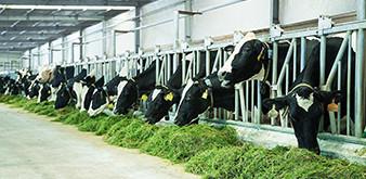 Những điều cần biết về chương trình kỹ sư chăn nuôi làm việc tại Nhật Bản dành cho sinh viên Học viện Nông nghiệp Việt Nam