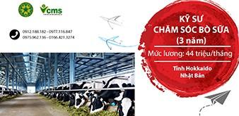 Thông báo tuyển Kỹ sư chăm sóc bò sữa làm việc tại Nhật Bản tháng 8